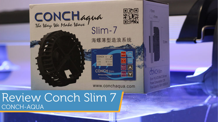 [Review] Conch Slim 7